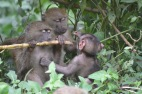 Baboons in Kakamega forest