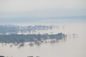 Flooded Lake Nakuru. The water has covered much of the plain. Nakuru in August 2012 (The trees here are the ones at the very top left of the 2011 picure