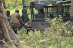 Rangers dragging drug lion out of their van. The lion had escaped from the safari park!