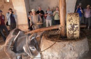 Pressing olives in Nazareth Village to make Olive Oil